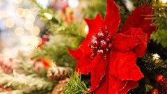 В Тамбовской области заготовят сосны и елки к Новому году