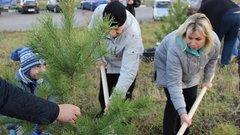 Ольга Слюсарева вместе с жителями приняла участие в посадке сосен