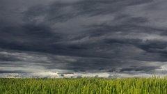Грозу и порывистый ветер прогнозируют в Калуге