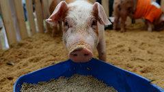 Россия запретила ввоз кормов для животных с Украины