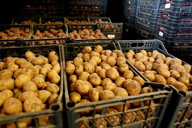 Неликвид для скота предложат россиянам: эксперт об эконом-картошке