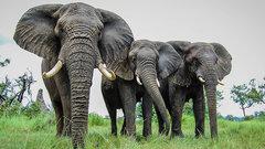 Слоны тратят меньше времени на сон, чем кто-либо