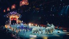 Больше миллиарда рублей потратят на реконструкцию иркутского цирка