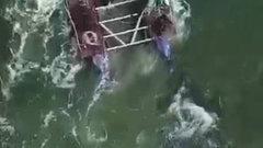 В первый день свободы косатки китовой тюрьмы отметили броском на 100 км