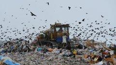 Жителям Подмосковья устроили мусорный «Диснейленд»