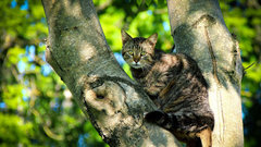 Полез за кошкой и сам застрял: новосибирского подростка сняли с дерева