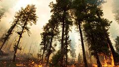 Вымирание мамонтов привело к пожарам