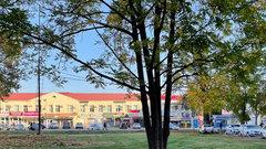 В Краснодаре благоустроят зеленую зону возле Чистяковской рощи