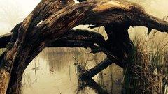 Кондакопшинское болото защитили от застройки