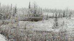 В ЯНАО выпал снег в первый день лета