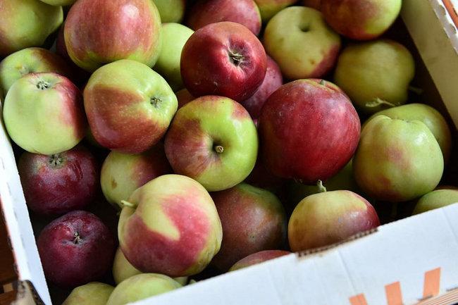 Зарегистрировано новое географическое наименование «Кубанские яблоки»