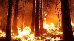 К тушению лесных пожаров в Северском районе привлекли более 700 человек