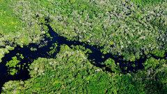 Ученые усомнились в девственности лесов Амазонки