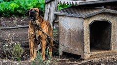 Кош-агачские пожарные спасли собаку, которая запуталась в цепи