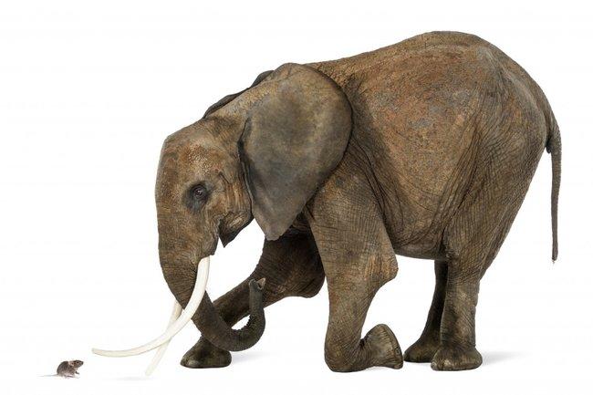 слон и мышь