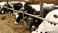 В Краснодарском крае увеличат финансирование животноводческой отрасли