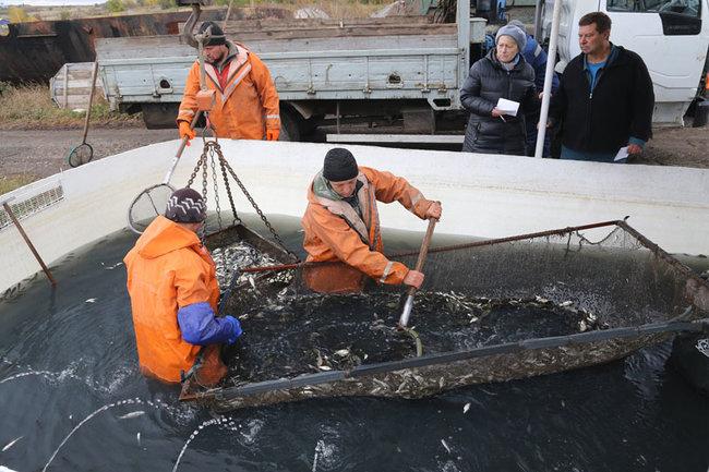 Выпуск толстолобиков в Воронежской водохранилище