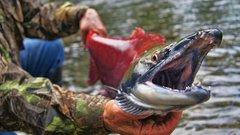 «Санкции вернулись бумерангом»: рыбаки Аляски пожаловались набольшие потери