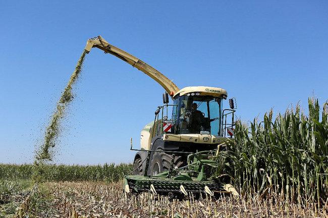 В Краснодарском крае направят 40 млн рублей дополнительно на поддержку элитного семеноводства.