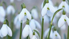 Цветы способны лечить слабоумие
