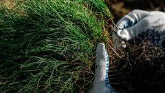 Курская область присоединится к Всероссийской акции «Сохраним лес»