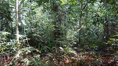 В Конго обнаружено торфяное болото грандиозной величины