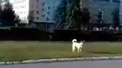 Поддержать Путина пришла одна собака: как в Перми прошел провластный митинг