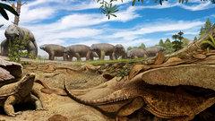 Ученые узнали, откуда у черепах взялся панцирь