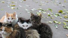 Тульскую «Октаву» зачистили от кошек