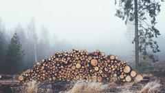 В Калининграде мэрия разрешила вырубку деревьев на улице Чайковского
