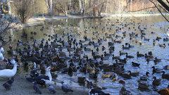 Лебединое озеро в Новосибирском зоопарке спасают ото льда