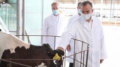 Развитие животноводства в Краснодарском крае: пятилетний рост по всем направлениям