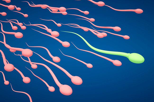 Медленые сперматозоиды
