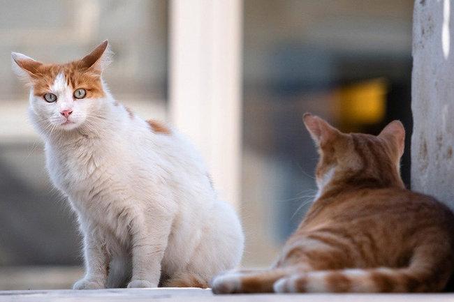 кошки кошка приют