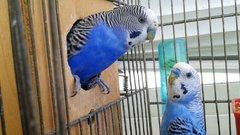 В России вводят уголовную ответственность за торговлю редкими животными в интернете