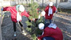 В Надымском сквере Воинской Славы посадили 50 деревьев