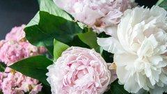 В ВАО до конца апреля высадят более 132 тысяч цветов