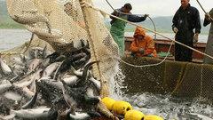 Рыбоперерабатывающие предприятия Краснодарского края впервые получат субсидии