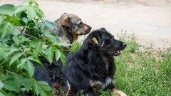Спикер Воронежской облдумы: Закон об ответственном обращении с животными несет благородную миссию