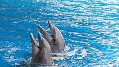 Украинские боевые дельфины предпочли смерть службе России