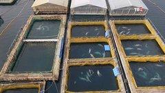Трекеры наденут и выпустят: депутат поведал о судьбе узников «китовой тюрьмы»