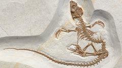 Палеонтологи откопали в Германии переходное звено эволюции