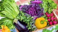 Тульский Роспотребнадзор напомнил о правилах употребления сезонных овощей и фруктов