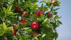 Тюменцам рассказали, какие деревья можно сажать осенью
