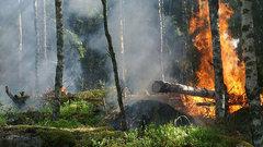 Жителей Курганской области предупредили о высокой пожароопасности
