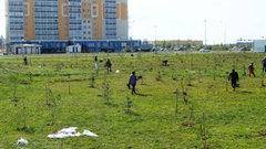 В Ханты-Мансийске пройдет акция по посадке деревьев «Лес Победы»