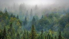Эксперты рассказали, как сохранить хвойные леса