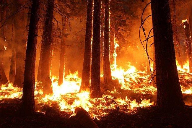 Картинки по запросу 20 ил 76 тушит пожар в сибири