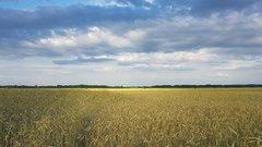 В Зуевском районе нашли инвестора для возрождения земли бывшего колхоза