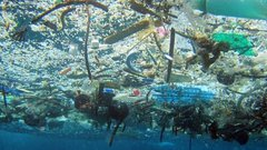Блокчейн может решить проблему пластика в Мировом океане